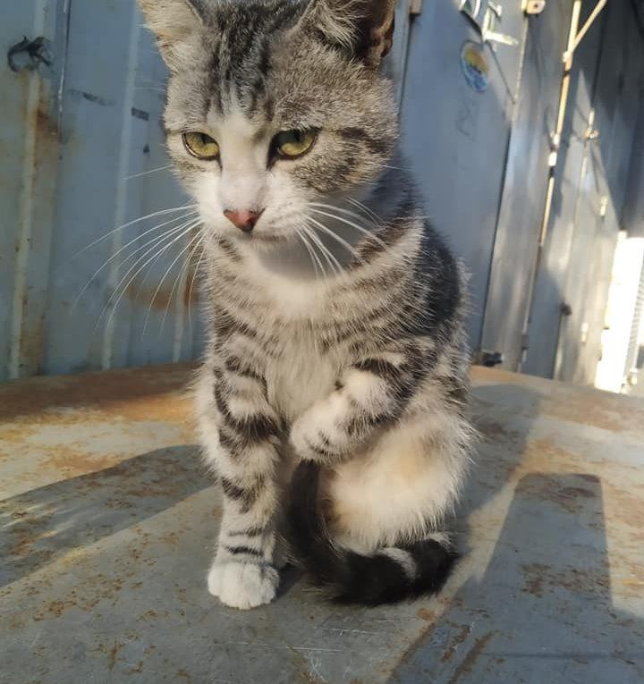 Молодий котик