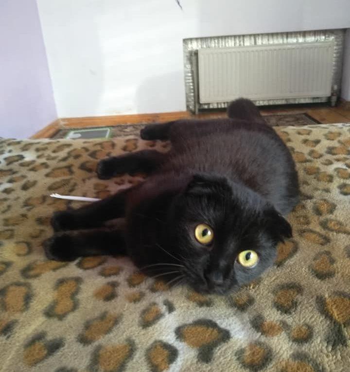 Загубилася кішка с.Липини